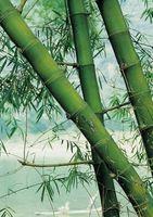 ¿Cómo deshacerse del moho negro en mi planta de bambú