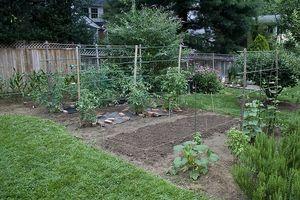 Vida útil de las semillas de jardín
