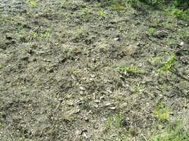 Cómo restaurar un antiguo huerto