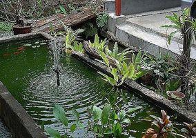 Cómo elegir plantas para un jardín de agua