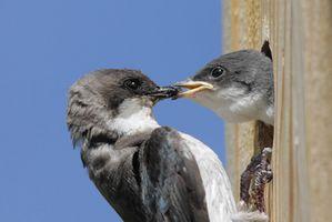 Información sobre cajas nido extrema