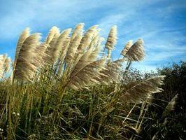 ¿Cómo desmenuzar hierbas ornamentales