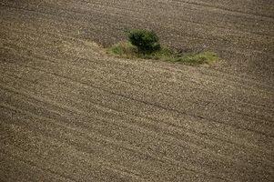 Nitrógeno orgánico en el suelo