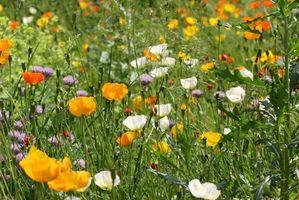Jardines con plantas nativas