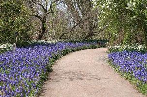 Plantas para un jardín inglés