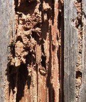 ¿Cómo deshacerse de las termitas subterráneas