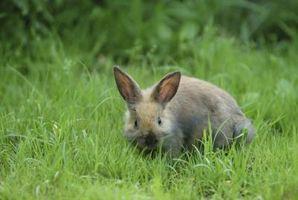 Cómo mantener a los conejos lejos de jardines de flores