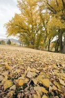 La mejor manera de recoger patio caída hojas