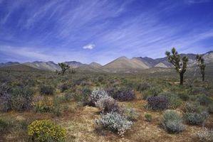 Características de los suelos de los desiertos
