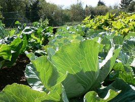 Hidroponía vs métodos tradicionales de jardinería