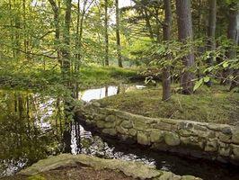 Bosques del país Ideas decoración