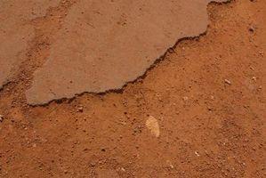 Las mejores plantas para el Control de la erosión