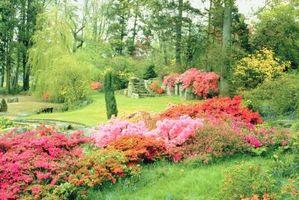¿Qué tipo de Spray voluntad de matar un arbusto de hoja perenne?