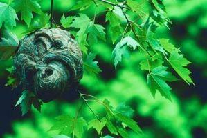 ¿Cómo puedo guardar una avispa de un árbol?