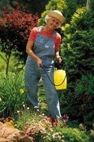¿Cómo deshacerse de bichos rojos pequeños en plantas de exteriores