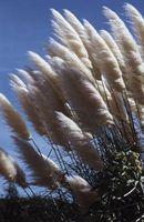 Lista de semillas de la hierba anual