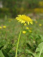 Cómo hacer un herbicida Natural