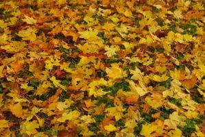 La mejor mochila de Gas alimentado sopladores de hojas