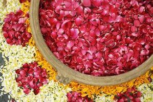 Pétalos de rosa y pétalos de rosa frescos liofilizado
