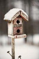 ¿Qué aves línea casas en invierno