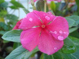 ¿Qué tipo de agua hace que las plantas crecen más rápido?