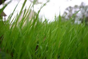 Efectos de orgánicos vs fertilizante inorgánico en el medio ambiente
