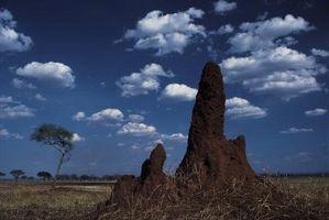 Cómo matar a las termitas de campo