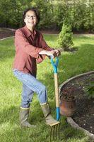 Cómo hacer un jardín en tu patio
