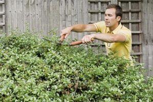 ¿Cómo deshacerse del moho negro en arbustos