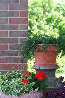 Consejos de jardinería rápido para vender mi casa