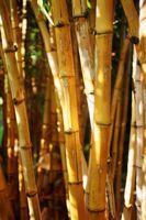 Cómo construir chozas con cañas de bambú