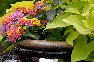 Cómo cultivar un jardín en la azotea