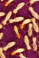 Cómo matar a las termitas en la casa