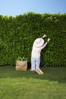 Herramientas para cortar arbustos grandes