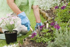 ¿Cal es bueno para las plantas del jardín en invierno?