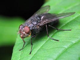 ¿Cómo deshacerse de las moscas en la mesa de Picnic