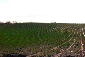 Comparación de fertilizante líquido para fertilizantes en seco
