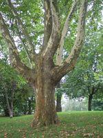 Herramientas para cortar árboles