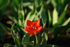 Flores nativas de Israel