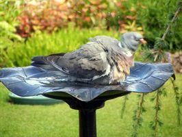 Enfermedades causadas por el agua potable desde el baño del pájaro