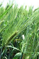 ¿Puede matar la hierba poniendo herbicida en él?