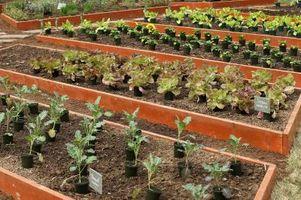 Ambientales Sprays seguros para áfidos de huerto