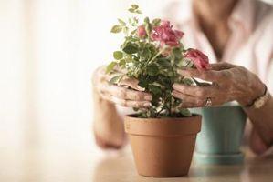 ¿Qué plantas de líquidos hará crecen más rápido?