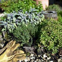 Hierbas que crecen en el otoño