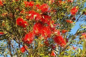 Plantas tropicales al aire libre