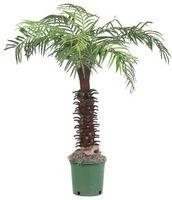 Cómo hacer Palm árbol suelo