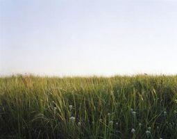 Leyes de propiedad de los corte de pasto del Louisiana