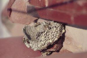 ¿Avispas dañar techos?