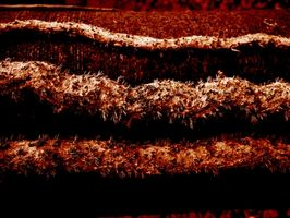 Cómo matar a las termitas en mantillo