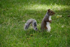 Maneras de mantener Squirels & roedores lejos de las plantas